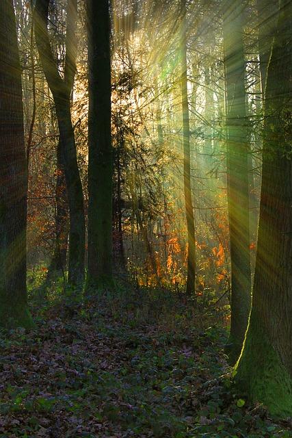 森に指す光
