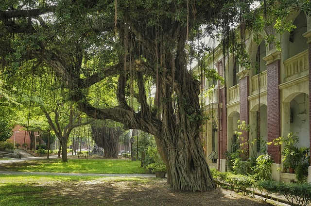 樹木 大きな木