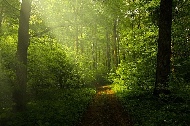 森林 小道 山道