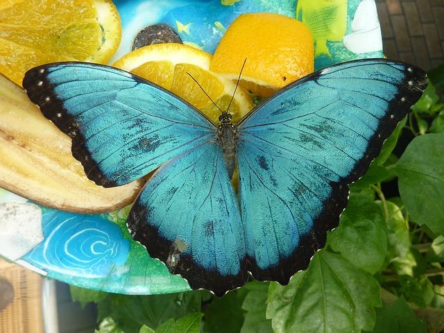 蝶 蝶々 アゲハ